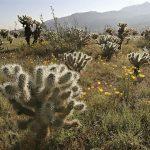 أسماء نباتات تعيش في الصحراء ومواصفاتها