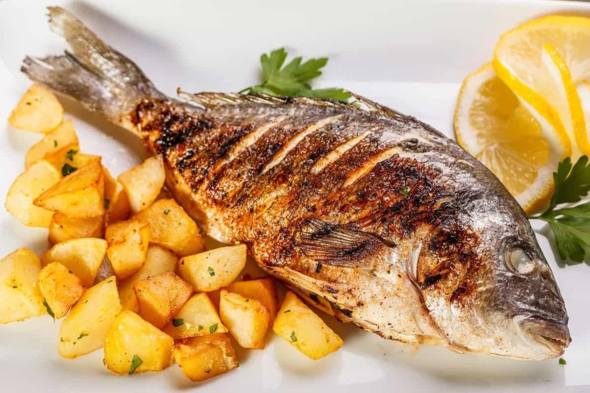 افضل نوع سمك للقلي في الزيت مجلة البرونزية