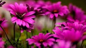 أزهارجميلة