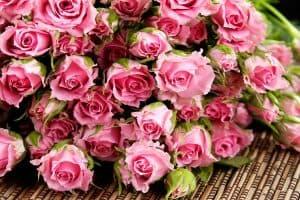 أجمل ورود طبيعية صور ورود وزهور روعه