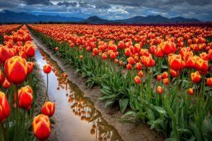 احلى صور ورود جوده عالية صور زهور منوع