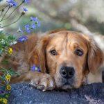 تفسير حلم الكلب لابن سيرين
