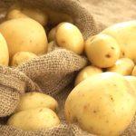 تفسير رؤية البطاطا في المنام لابن سيرين ومعناه في حالات الخير والشر