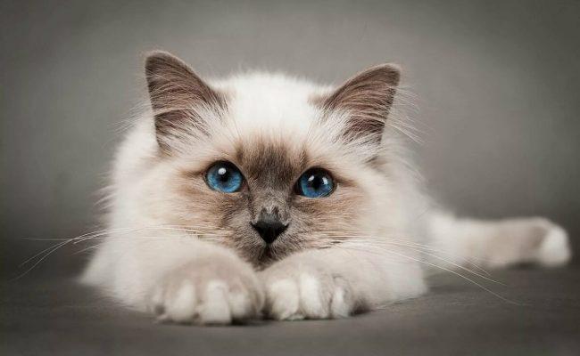 اعراض طاعون القطط