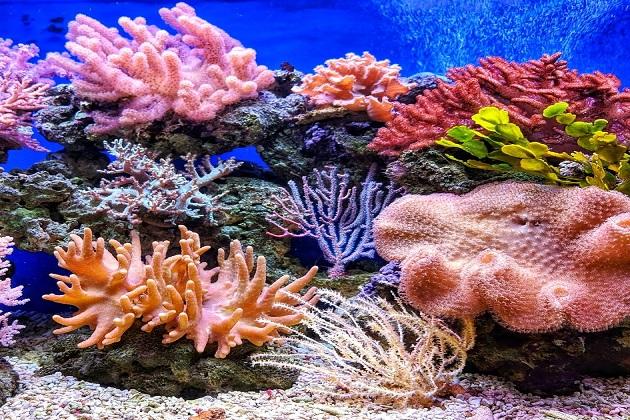 الشعاب المرجانية نظام بيئي قوي لا يتأثر بالتغيرات البيئية صواب أم خطأ