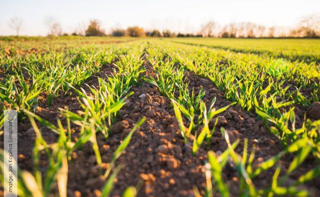 أهمية الزراعة في الوطن العربي