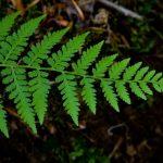 النباتات التي لها اوعية للنقل