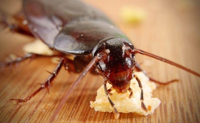 تفسير حلم رؤية الصراصير في البيت